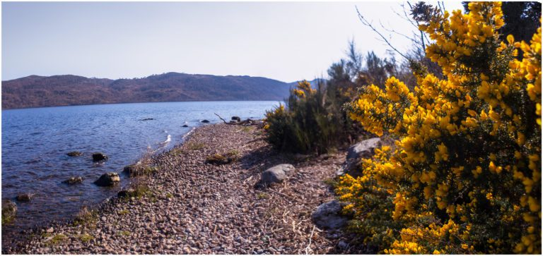 Banks of Loch Ness at Lochside Hostel