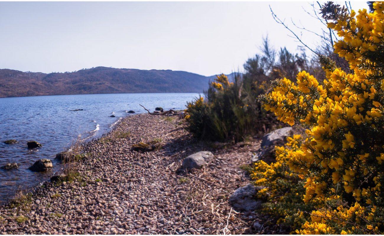 Banks of Loch Ness at Lochside Hostel